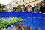 Okrasné ryby na Rybářských slavnostech v Třeboni.